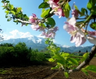 Primavera a San Mauro