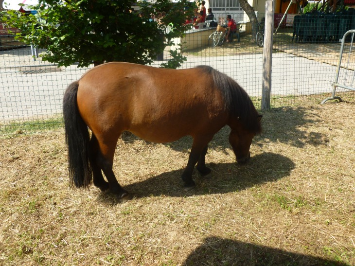 un bel pony